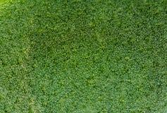Fundo verde abstrato, folha da planta, macro Close up extremo Fotos de Stock Royalty Free
