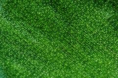 Fundo verde abstrato, folha da planta, macro Close up extremo Imagem de Stock