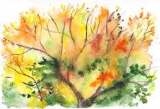 Fundo verde alaranjado da folha da árvore do amarelo do outono da aquarela Imagem de Stock