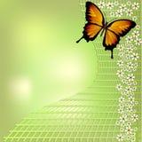 Fundo verde alegre da mola do bokeh com borboleta amarela e as flores brancas pequenas na grade Para seu projeto da mola Fotografia de Stock Royalty Free