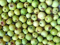 Fundo verde-amarelo da maçã Fotos de Stock Royalty Free