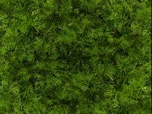 Fundo verde baseado em fotos da grama da mola foto de stock