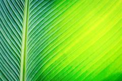 Fundo verde bonito da folha imagem de stock royalty free