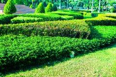 Fundo verde bonito da ?rvore, das plantas, da floresta e das flores nos jardins exteriores imagem de stock royalty free