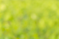 Fundo verde borrado Imagem de Stock
