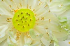 Fundo verde borrado close up da folha no jardim fotografia de stock