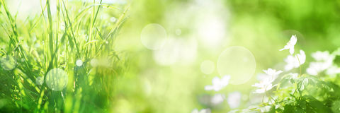 Fundo verde-claro do panorama da mola Imagens de Stock