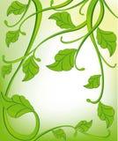 Fundo verde com elementos florais Fotografia de Stock