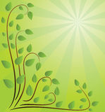 Fundo verde com filiais Foto de Stock Royalty Free
