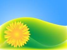 Fundo verde com girassol Imagens de Stock Royalty Free