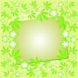 Fundo verde com ornamento floral Imagens de Stock