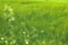 Fundo verde com um teste padrão do hea Imagens de Stock Royalty Free