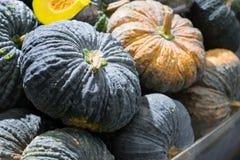 Fundo verde da abóbora, vegetais para saudável imagem de stock