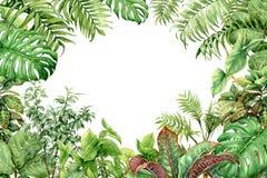 Fundo verde da aquarela com plantas tropicais ilustração do vetor