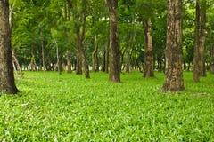 Fundo verde da floresta em um dia ensolarado Fotografia de Stock
