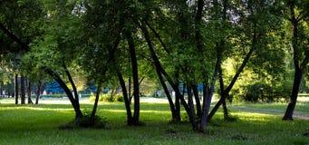 Fundo verde da floresta em um dia ensolarado Imagem de Stock