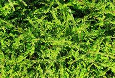 Fundo verde da folha imagem de stock