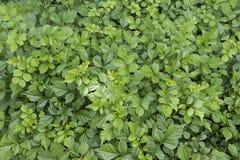 Fundo verde da folha Foto de Stock Royalty Free