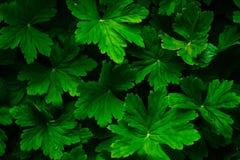 Fundo verde da folha imagem de stock royalty free