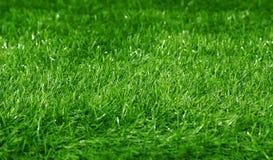Fundo verde da grama do campo de futebol Fotos de Stock