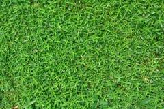 Fundo verde da jarda Fotografia de Stock Royalty Free
