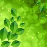 Fundo verde da luz do sumário do bokeh da mola com Imagem de Stock