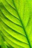 Fundo verde da natureza Fotos de Stock Royalty Free