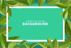 Fundo verde da natureza do vetor das folhas de chá Imagens de Stock