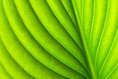 Fundo verde da textura da folha fotos de stock