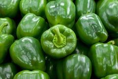 Fundo verde das pimentas de Bell Foto de Stock