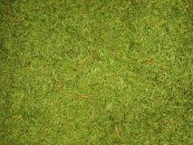 Fundo verde de agulhas do abeto Fotos de Stock