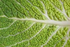 Fundo verde - detalhe de uma folha do repolho Imagens de Stock Royalty Free