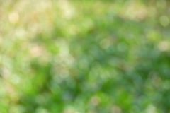 Fundo verde do bokeh Fotografia de Stock Royalty Free