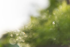 Fundo verde do bokeh Fotos de Stock Royalty Free