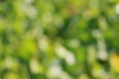 Fundo verde do bokeh Imagem de Stock