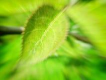 Fundo verde do borrão com folha fotografia de stock