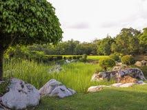 Fundo verde do jardim da árvore Imagem de Stock