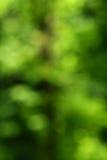Fundo verde do sumário da natureza Fotos de Stock