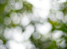 Fundo verde do sumário do bokeh Imagem de Stock