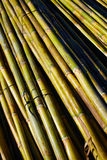 Fundo verde do teste padrão da textura da colheita do bastão do rio Fotos de Stock