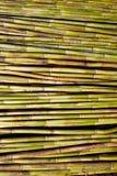 Fundo verde do teste padrão da textura da colheita do bastão do rio Foto de Stock Royalty Free
