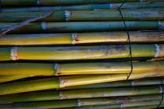 Fundo verde do teste padrão da textura da colheita do bastão do rio Fotografia de Stock Royalty Free