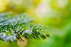 Fundo verde DoF raso da natureza com espaço da cópia, macro de g Foto de Stock Royalty Free