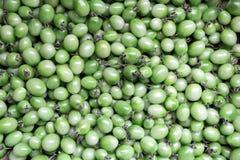 Fundo verde dos tomates Fotos de Stock