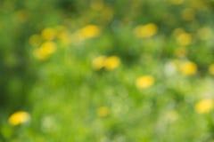 Fundo verde e amarelo borrado da natureza Imagens de Stock