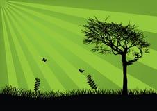 Fundo verde fresco Ilustração Stock