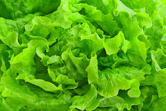 Fundo verde fresco da salada da alface Fotografia de Stock