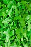 Fundo verde fresco do aipo Fotografia de Stock