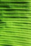Fundo verde macro da folha Imagens de Stock