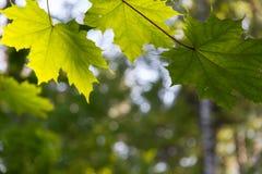 Fundo verde natural com foco seletivo Fotos de Stock